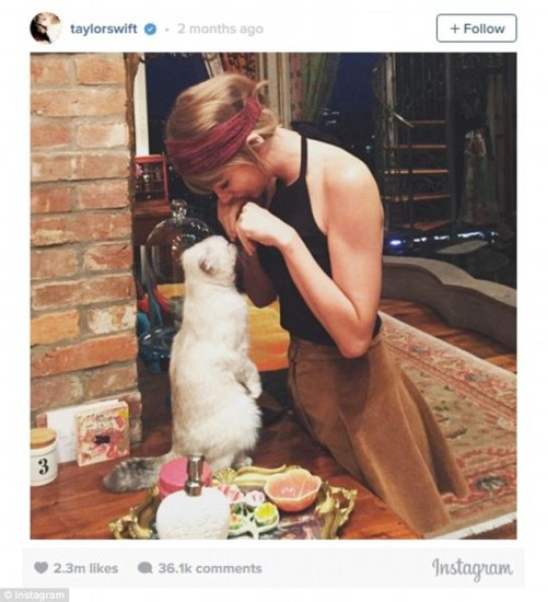 Number 8 - Taylor Swift with her cat Meredith again.
