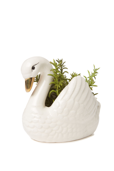 Typo_animal planter_19.99